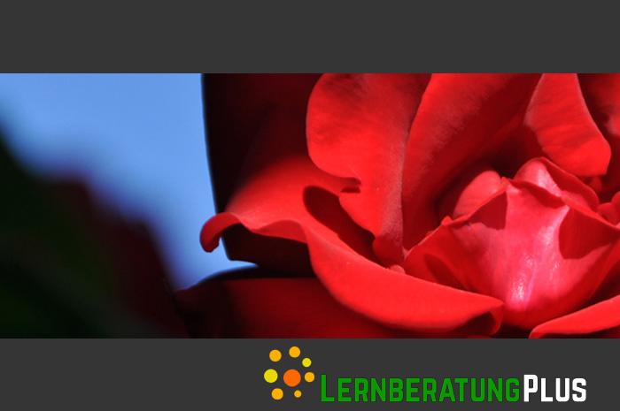lernberatungplus.de Lernberatung und psychologische Beratung in Deggendorf